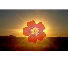 Floral Aura Photographic Print