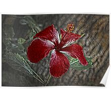 Red Hibiscus Decked Out Poster