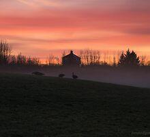 morning walk in the fog by JorunnSjofn Gudlaugsdottir