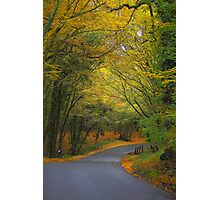 Autumn colours 2012 Photographic Print