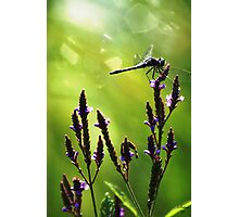 Dragonfly 1st Light Photographic Print