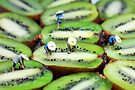 Planting rice on kiwifruit by Paul Ge
