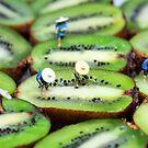 Planting rice on kiwifruit by Paul Ge