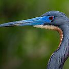 Tricolored Profile  by Daniel  Parent