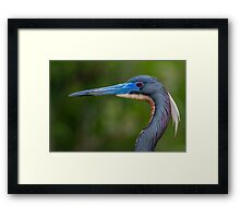 Tricolored Profile  Framed Print