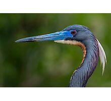 Tricolored Profile  Photographic Print