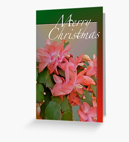 Merry Christmas Greeting Card - Christmas Cactus Greeting Card