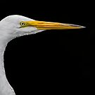 White on black Egret by Daniel  Parent