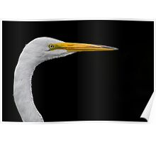 White on black Egret Poster