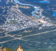 Squirrel on the edge. by JamesA1