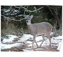 Doe Deer Poster