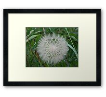 Pouf Ball Framed Print