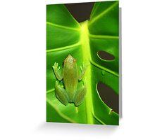 Greater Hatchet Faced Treefrog (Sphaenorhynchus lacteus)  Greeting Card