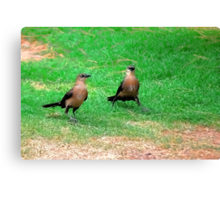Wacky Grackles Walking in the Park Canvas Print