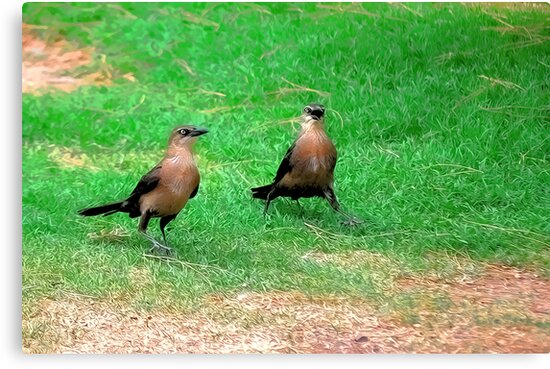 Wacky Grackles Walking in the Park by HDTaylor
