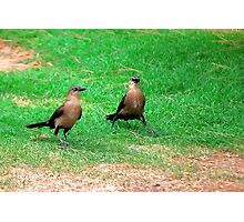 Wacky Grackles Walking in the Park Photographic Print