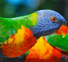 Lorikeet Profile by peasticks