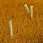 Posts in the Marsh by FedericoArts