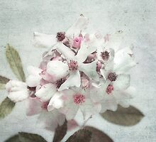 floral 2 by Karm Photography