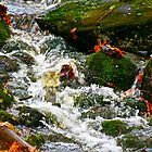 Babbling Brook by FedericoArts