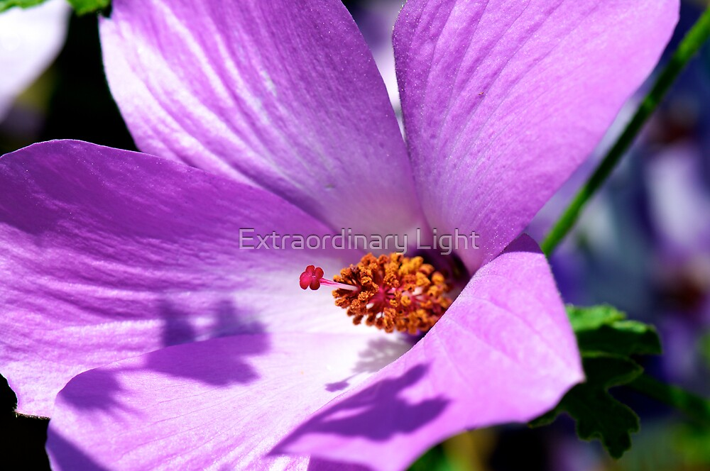 Native Hibiscus Flower by Renee Hubbard Fine Art Photography
