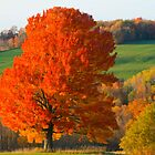 Fall Foliage by FedericoArts