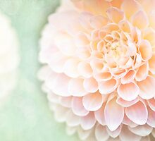 floral 15 by Karm Photography