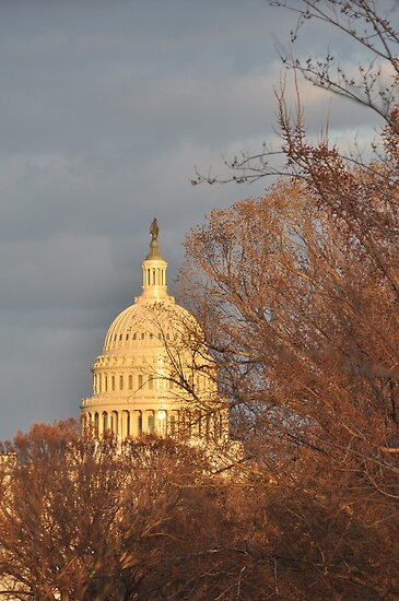 The Capitol, Washington DC by Morag Anderson