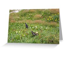 Magpies One - 07 10 12 Greeting Card