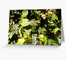 Paper Wasp Two - 20 10 12 Greeting Card