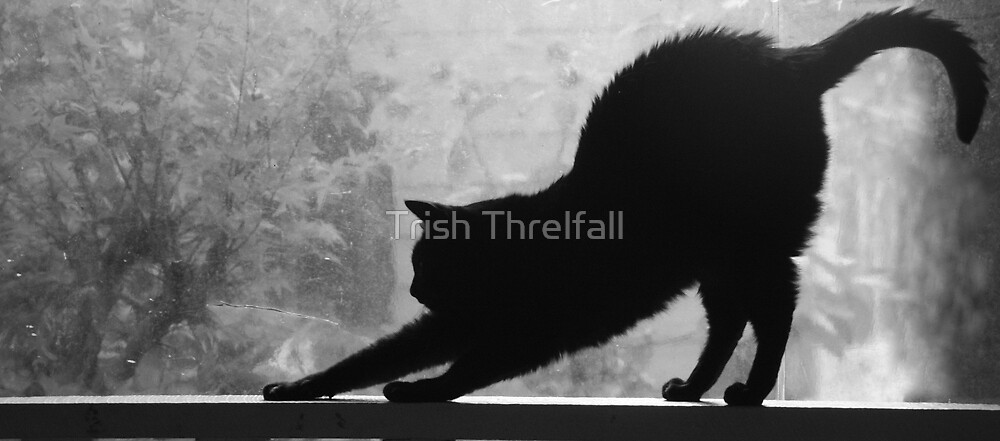 the  preoccupation of  the black  cat by Trish Threlfall
