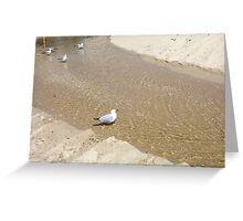 Gulls In Water One - 20 10 12 Greeting Card