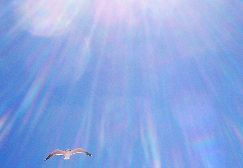 Seagull Three - 21 10 12 by Robert Phillips