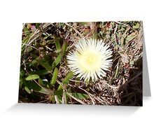 Beach Flower One - 21 10 12 Greeting Card
