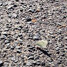 Butterfly One On The Road - 21 101 2 by Robert Phillips