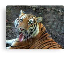 Stick your tongue  and say ahhhhh Canvas Print