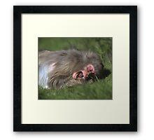 """""""Catching Flies"""" Framed Print"""