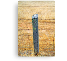 Rolling posts grow no moss Canvas Print