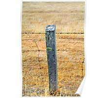 Rolling posts grow no moss Poster
