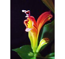 Lipstick Plant Photographic Print