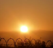 Barbed Sunrise by skyhat
