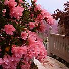 Rhododendron around my house by JeffeeArt4u