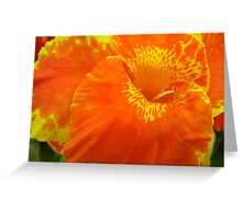 Crazy Canna Greeting Card