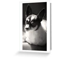 Eddie ~ Greeting Card