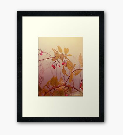 Nightshade Berries Framed Print