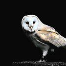 barn owl  by brett watson