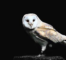 barn owl  by Brett Watson Stand By Me  Ethiopia