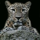 leopard by Brett Watson Stand By Me  Ethiopia