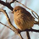 Little Round Bird by lorilee