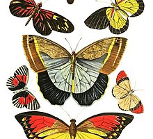 Vintage Butterfly Collection by ginpix